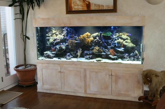 аквариум домашний