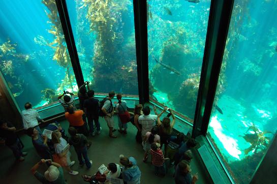 аквариум зоопарк