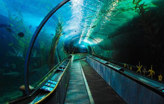 аквариум тоннель