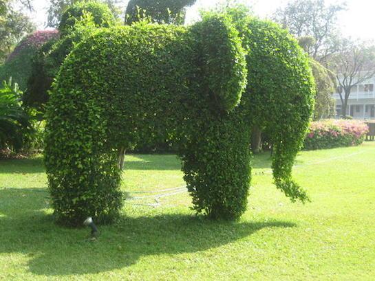 живая изгородь слон