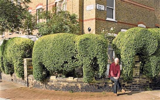 живая изгородь слоны